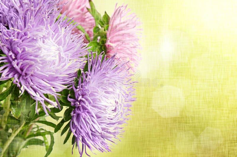 Download Aster flowers stock image. Image of closeup, close, fiber - 30669665
