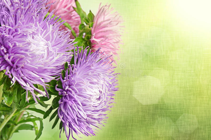 Download Aster Flowers Royalty Free Stock Photography - Image: 30794127