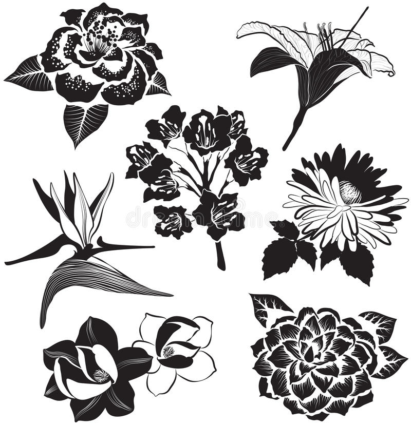 Camellia Flower Line Drawing : Aster magnolia bird of paradise flower lily and