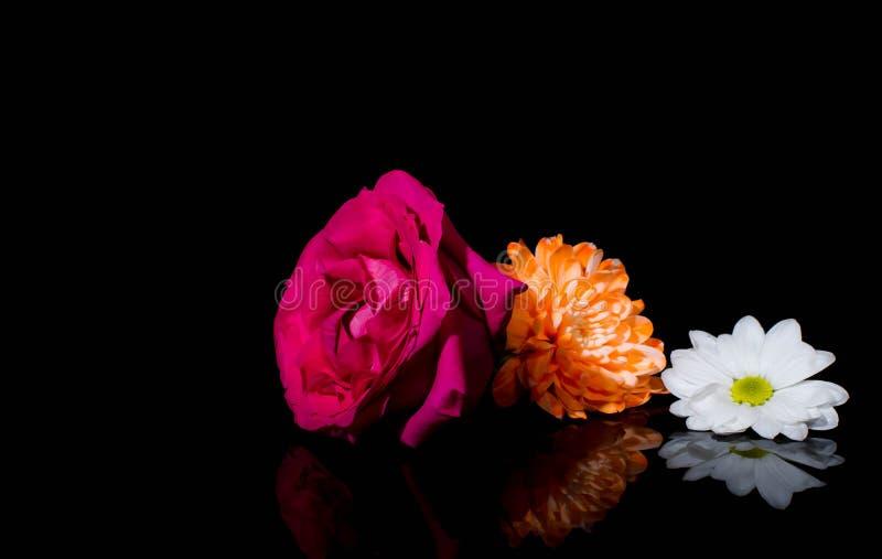 Aster, rozen, zonnebloemen en kamillebloemen royalty-vrije stock afbeelding