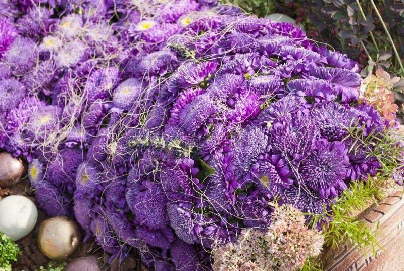 Aster Violet Bouquet Stock Images