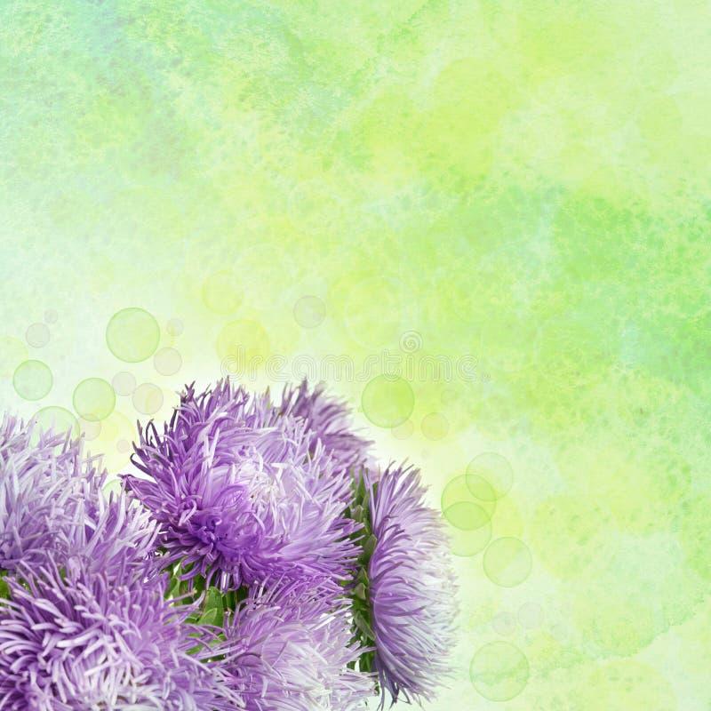 Asterbloemen royalty-vrije illustratie