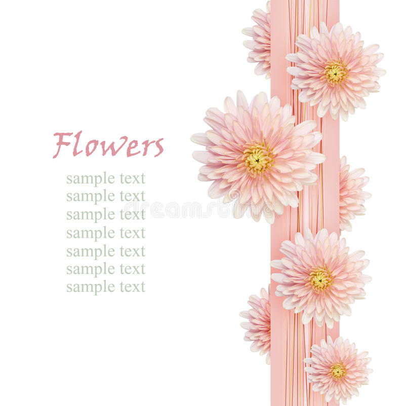 Asterbloemen op roze lint royalty-vrije illustratie