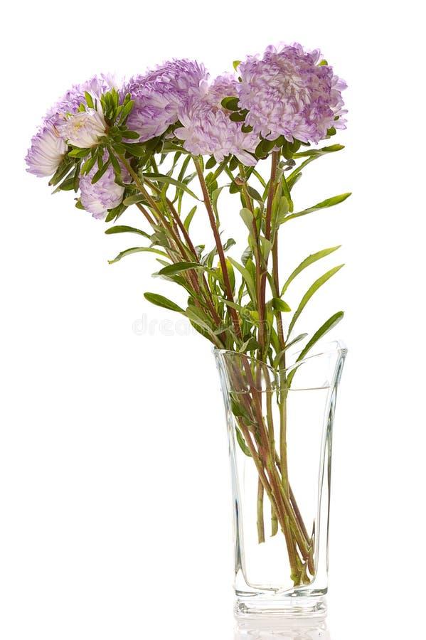 Asteres de la lila en el florero de cristal fotos de archivo libres de regalías