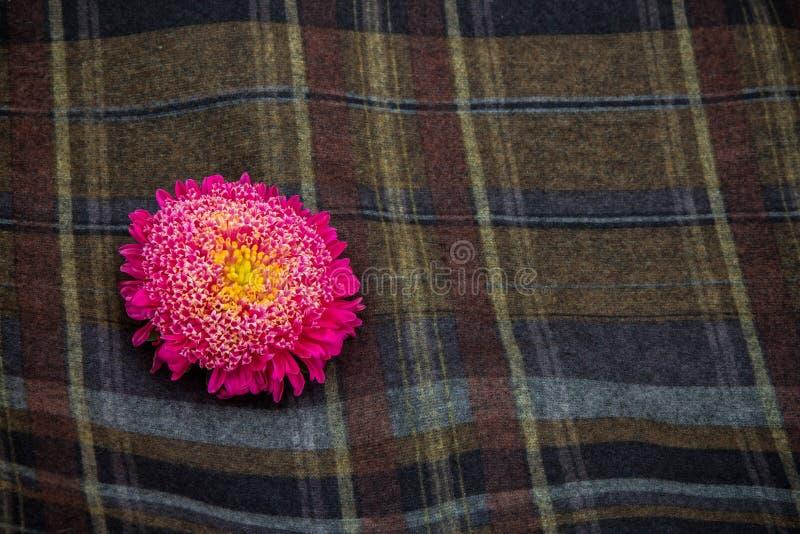 Download Asteres rosados foto de archivo. Imagen de jaula, oscuro - 100527452