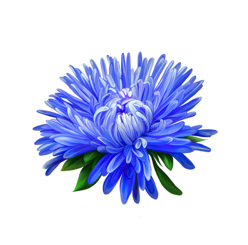 asteria Blå blomma, vårblomma Isolerat på royaltyfri fotografi