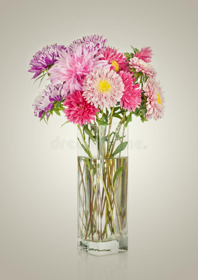 Asters bouquet. Beautiful flowers in vase isolated royalty free stock photos
