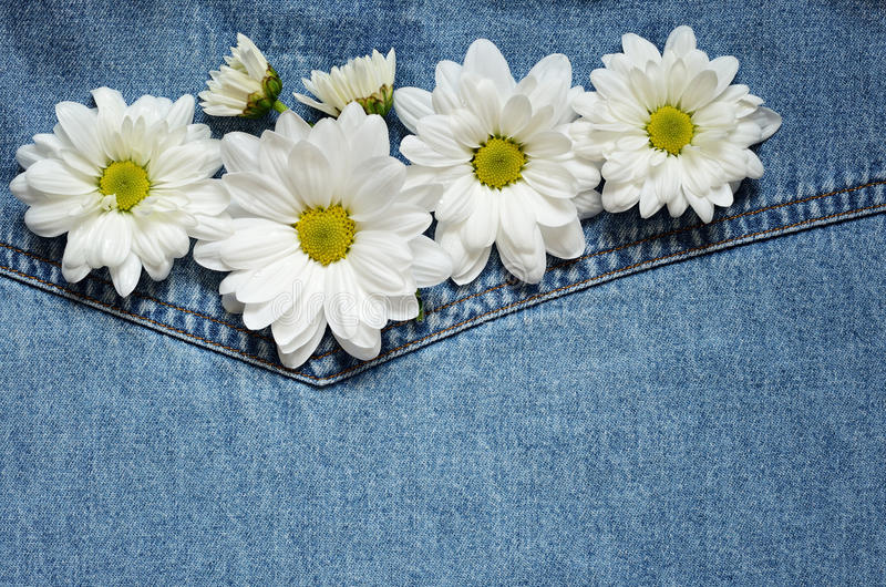 Download Asters on denim fabric stock photo. Image of backdrop - 31010856