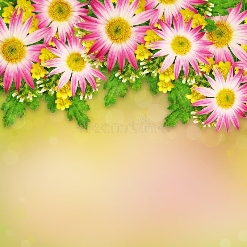 Asters en wilde bloemen royalty-vrije stock fotografie