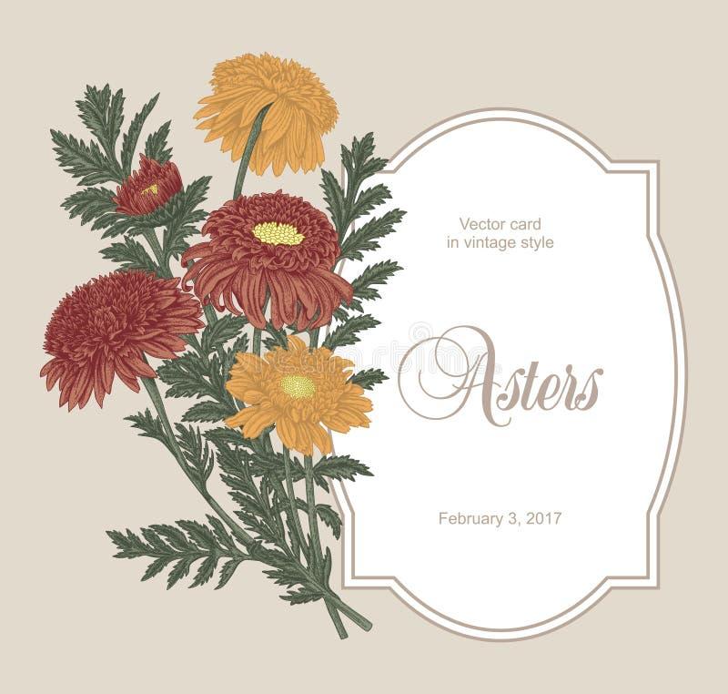 Asters. Flowers. Summer flowers. Garden. Vintage illustration. Classic card. Roses. vector illustration