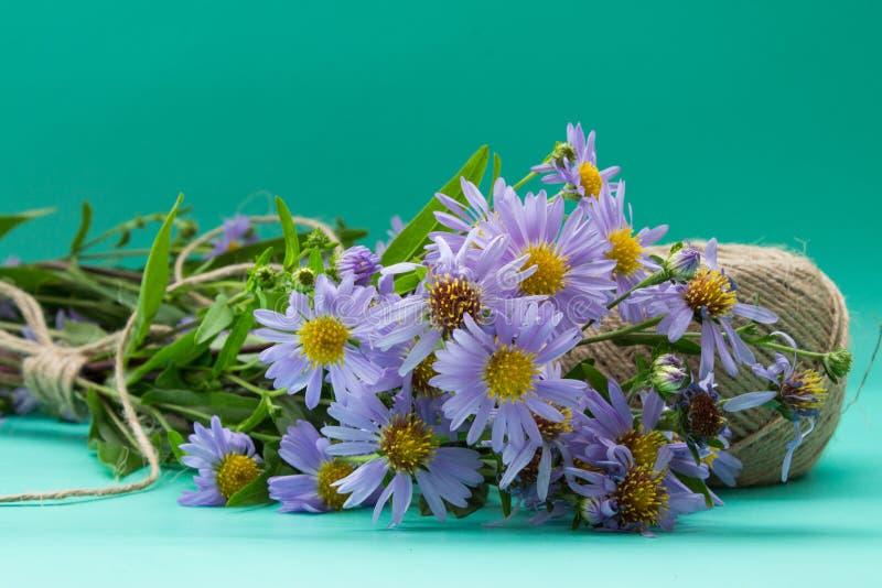 Astersboeket van violette die bloemen met koord op neutraal g worden gebonden royalty-vrije stock foto