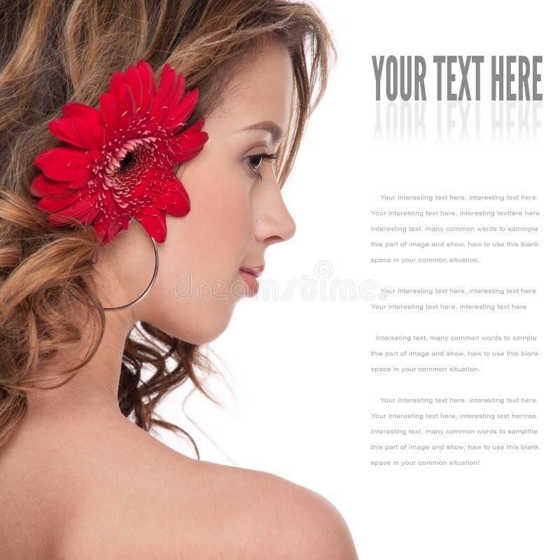 asteru piękna zamknięta kwiatu dziewczyny czerwień zamknięty zdjęcie royalty free