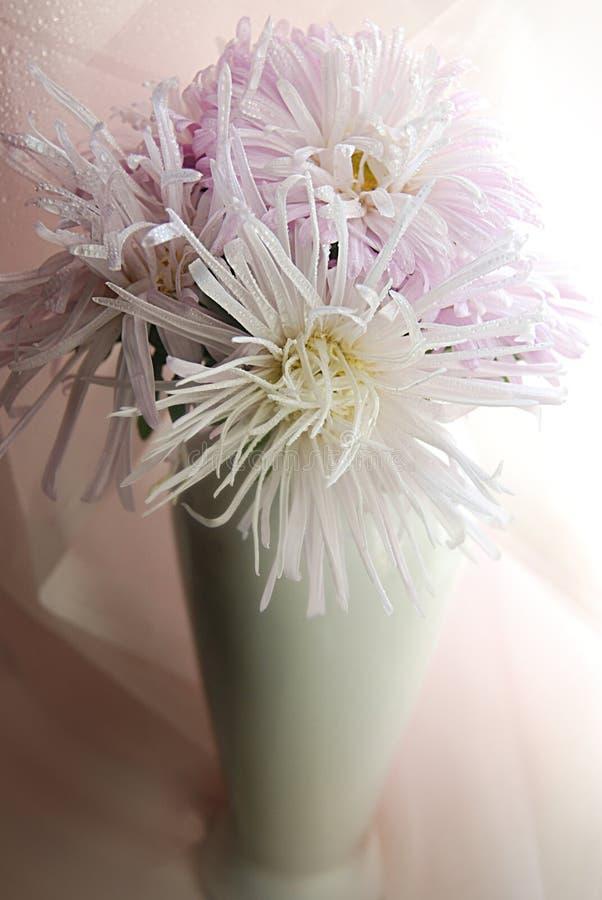 Astery w białej wazie dla kobiet zdjęcie stock