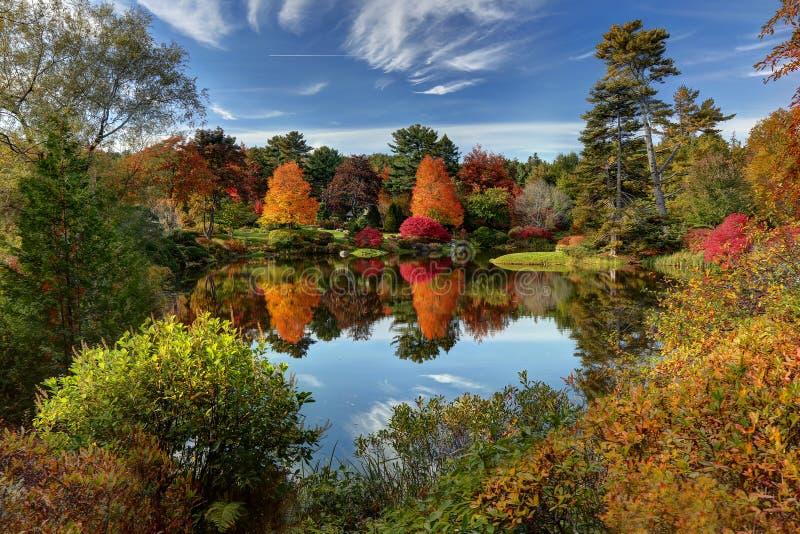 Asticou Azalea Garden royalty free stock photo
