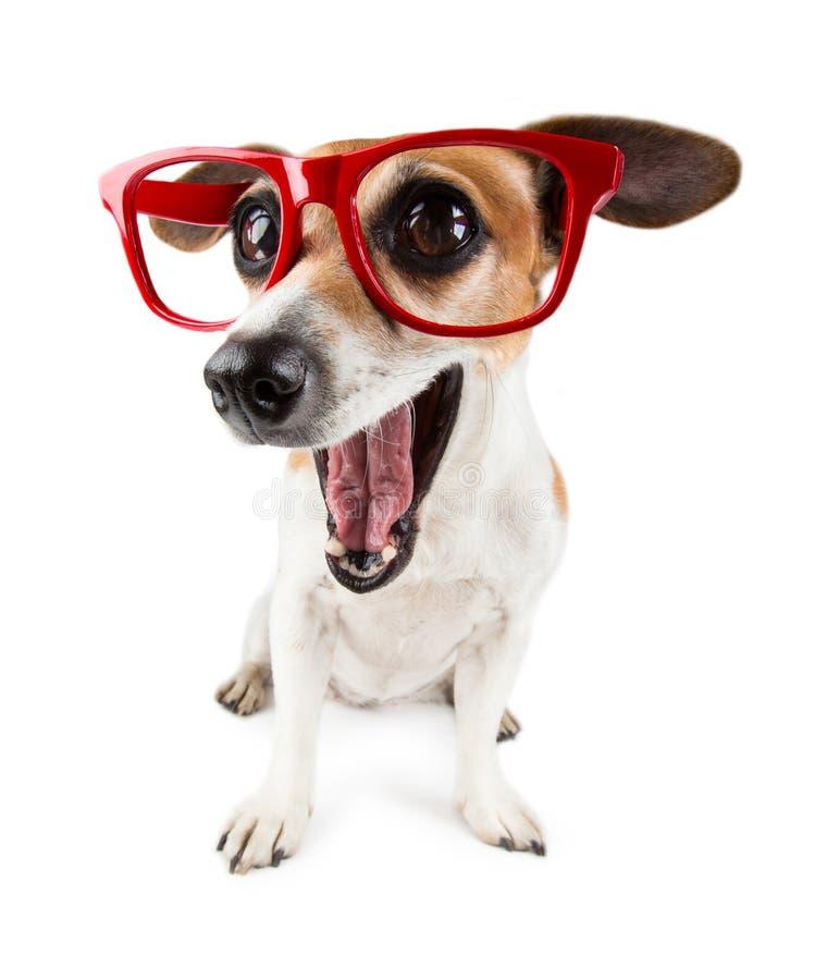 Astonished funny dog with big eyes royalty free stock images