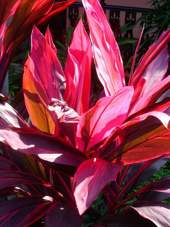 Astonishing red leaves stock photo
