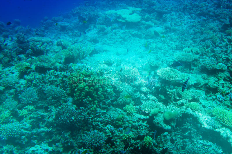 Download Astonishing Undersea World Of Red Sea. Stock Photo - Image: 15757244