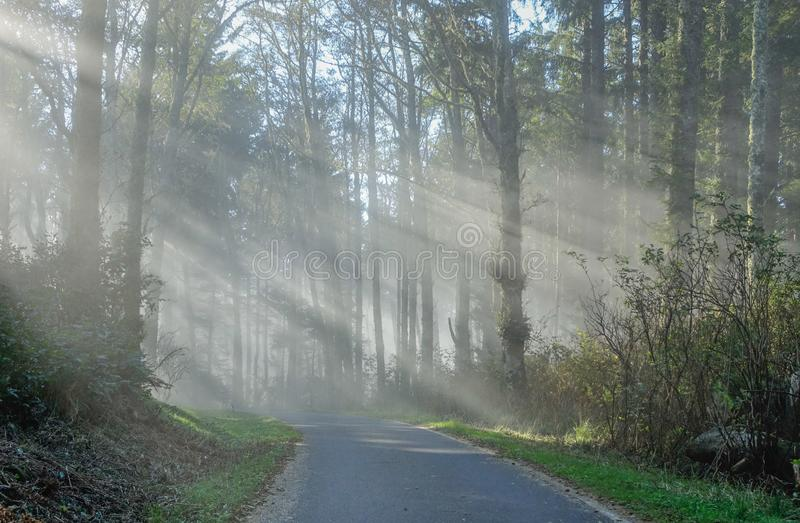 Mist of the forest at sunrise royalty free stock photo