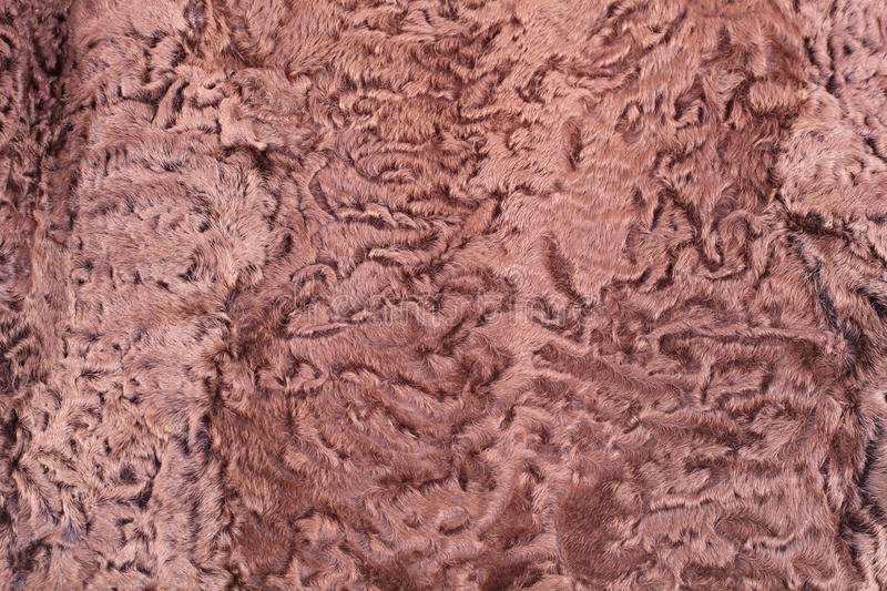 Astrakhan fur. Brown curled background stock photography