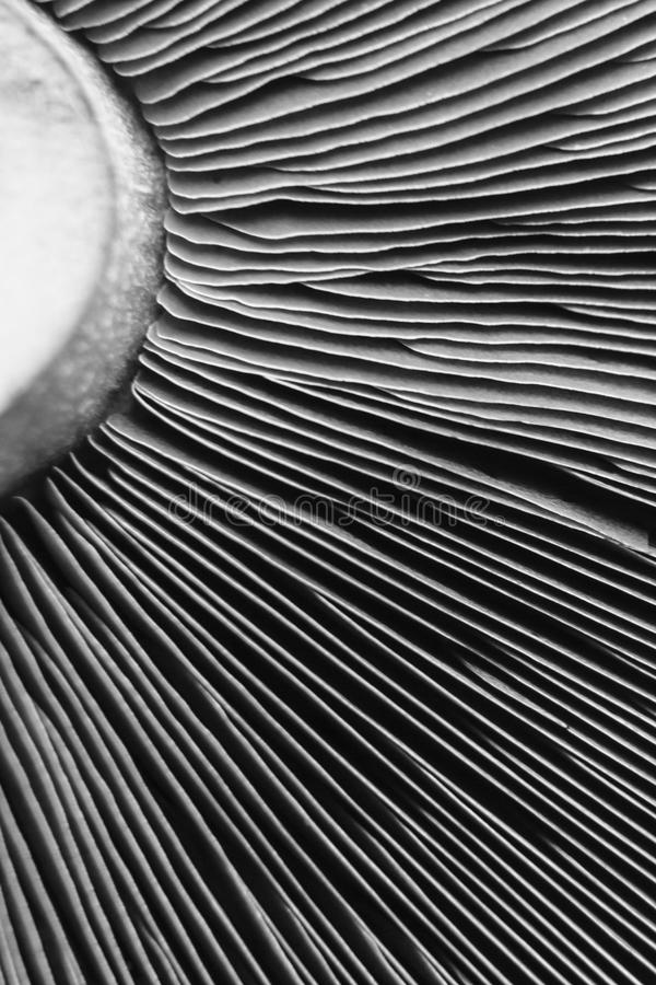 Astrattismo in bianco e nero creato da un fungo sentito fotografia stock