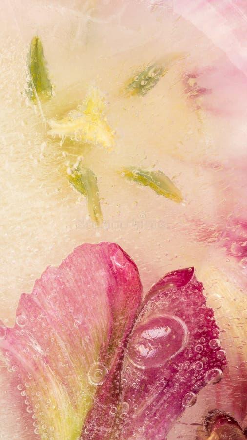Astrazione con i tulipani congelati dei fiori immagine stock libera da diritti