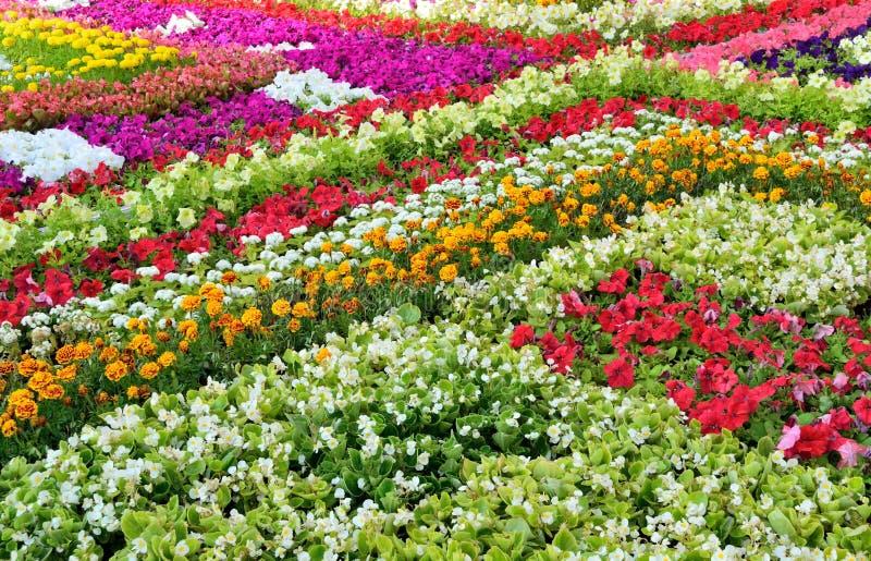 Astrazione floreale con effetto della sfuocatura fotografie stock