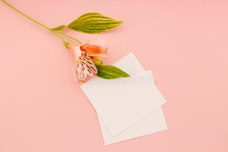 Astroemeria cor-de-rosa em um papel fotografia de stock