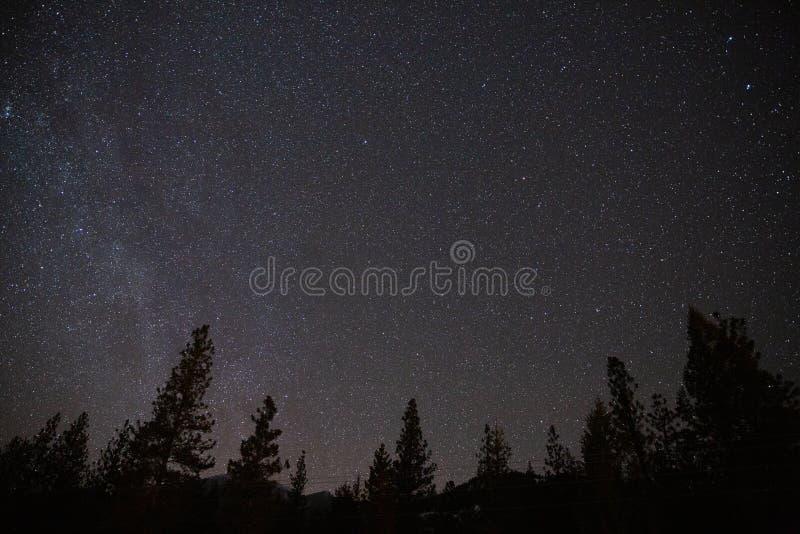 Astrofotografii gwiaździsty nocne niebo z lasem i drzewa sylwetkowi zdjęcie stock