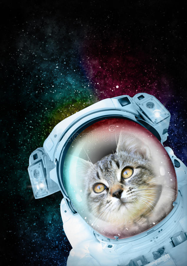 Astronaut Cat exploring the space. Cat in spacesuit exploring the universe. Any cat is a great explorer moved by curiosity and the need of discover new worlds