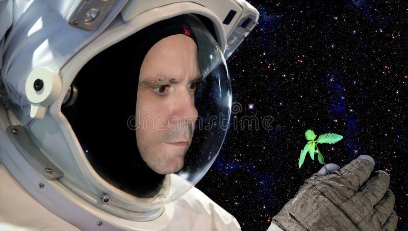 Astronaut die een klein kruid houden stock afbeeldingen