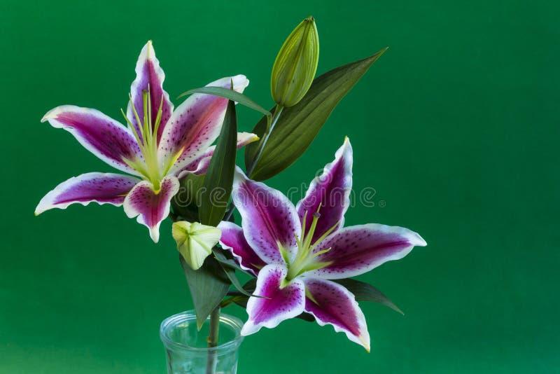 Astronome Lily Flower photo libre de droits