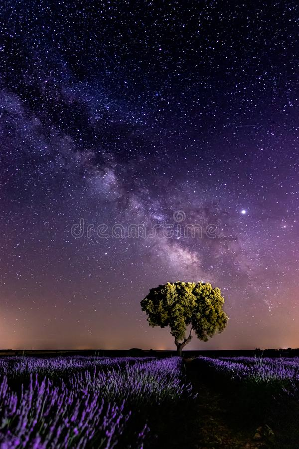 Milky Way and lavender fields royalty free stock photos
