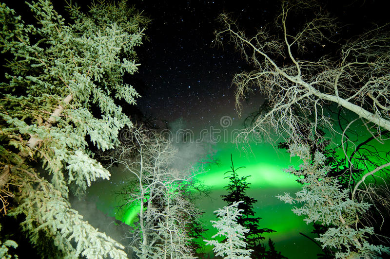 Star trails and Northern lights in sky over taiga royalty free stock photos