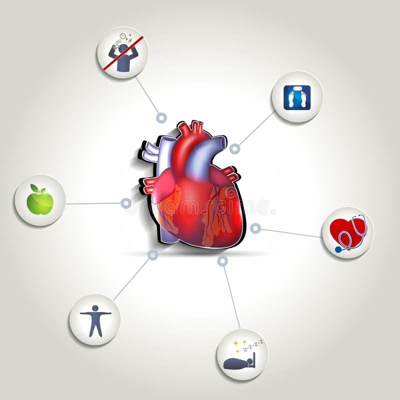 Astuces saines de soin de coeur illustration libre de droits