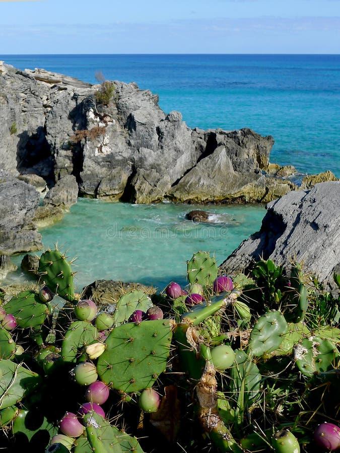 Astwood zatoczka, Bermuda zdjęcia royalty free