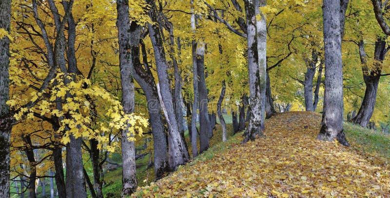 Asveja Regionaal Park stock afbeeldingen