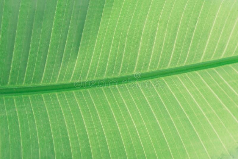 Asymmetry, Botanical, Bright stock photo