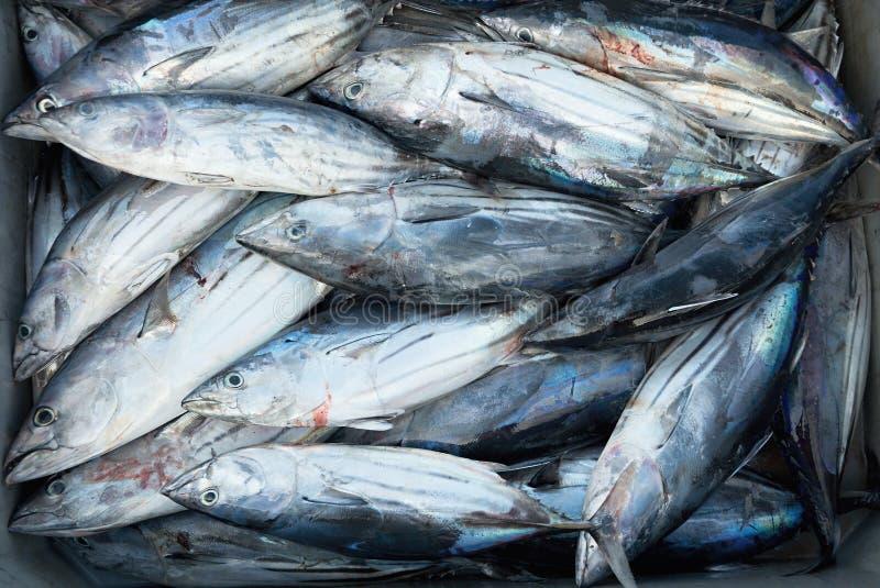 Atún de Longtail, caja de pescados frescos foto de archivo
