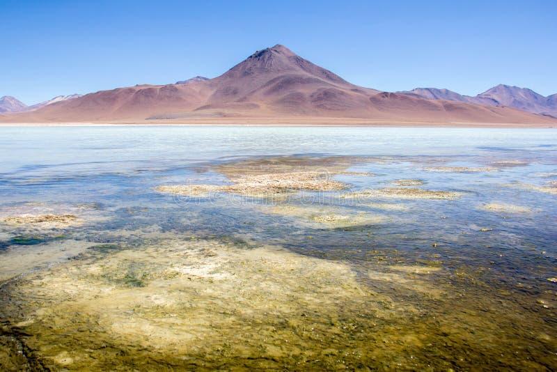 Atacama öken fotografering för bildbyråer