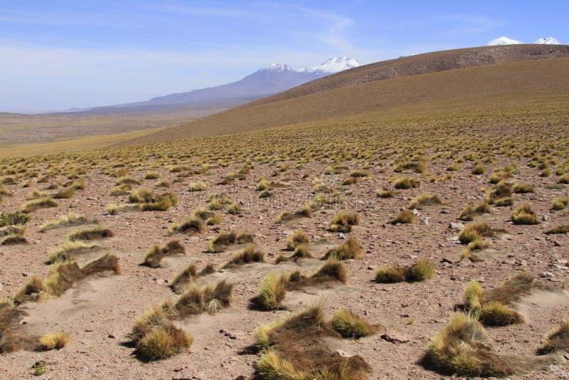 Download Atacama de Salar obraz stock. Obraz złożonej z widok - 57668953