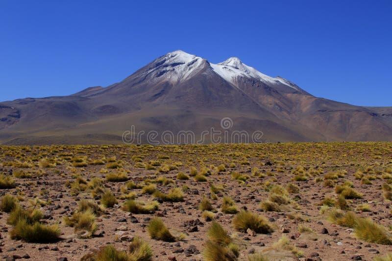 Download Atacama de Salar obraz stock. Obraz złożonej z krzak - 57669167