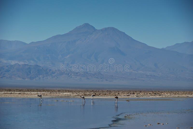 Atacama desert - Chile royalty free stock photo
