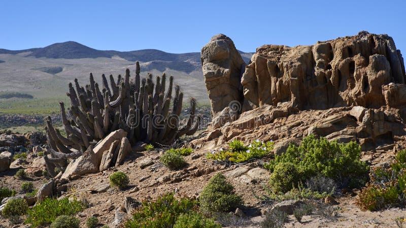 15-08-2017 Atacama Desert, Chile. Flowering Desert 2017 royalty free stock photos