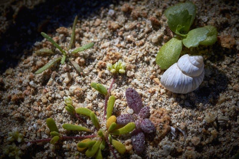 15-08-2017 Atacama Desert, Chile. Flowering Desert 2017 stock photography