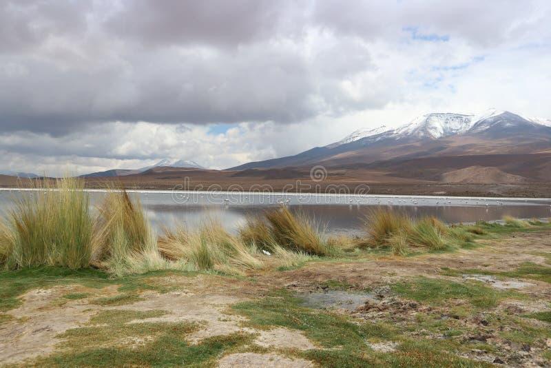 Atacamawoestijn Laguna Capina royalty-vrije stock fotografie