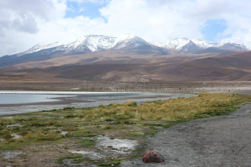 Atacamawoestijn Laguna Capina royalty-vrije stock afbeeldingen
