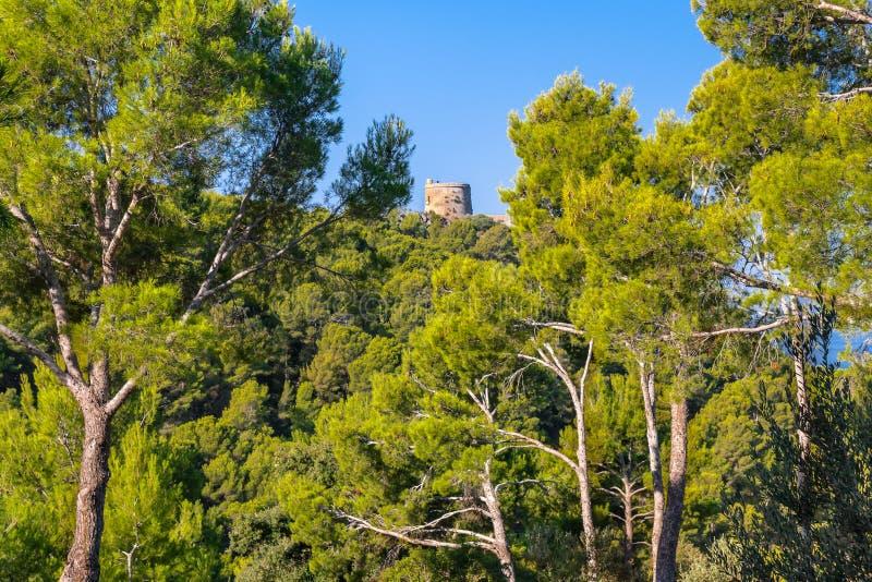 Atalaya medieval en bosque del árbol de pino en la isla de Majorca imagenes de archivo