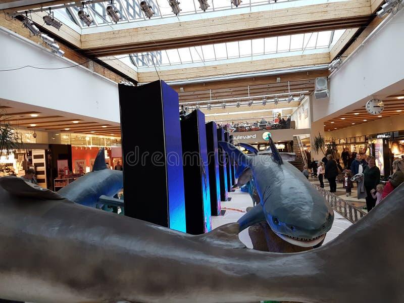 Ataque del tiburón imágenes de archivo libres de regalías