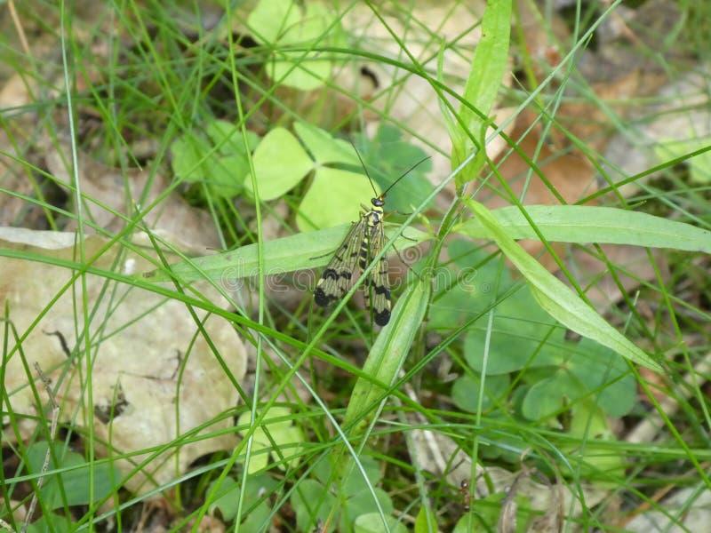 Ataque desde un escondite la mosca en la hierba verde fotografía de archivo libre de regalías