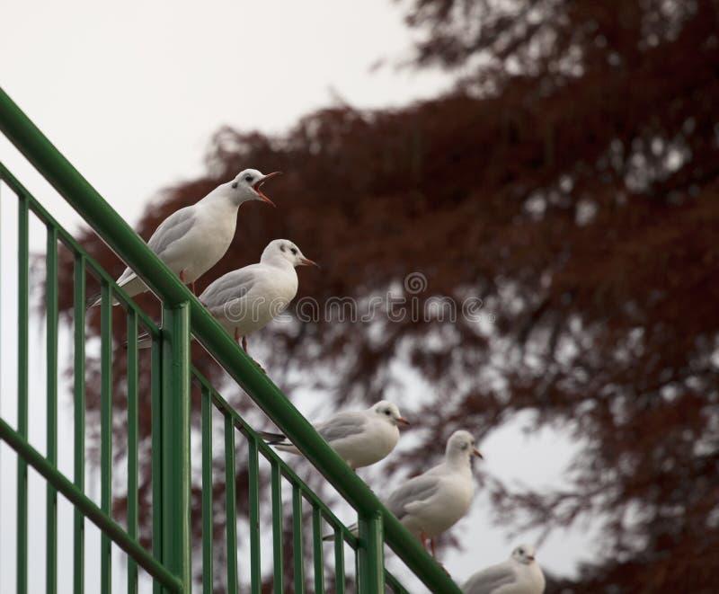 Ataque do lago park dos pássaros foto de stock royalty free